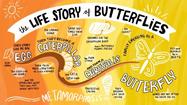 A Visual Storytelling Guide For People Who Can't Draw